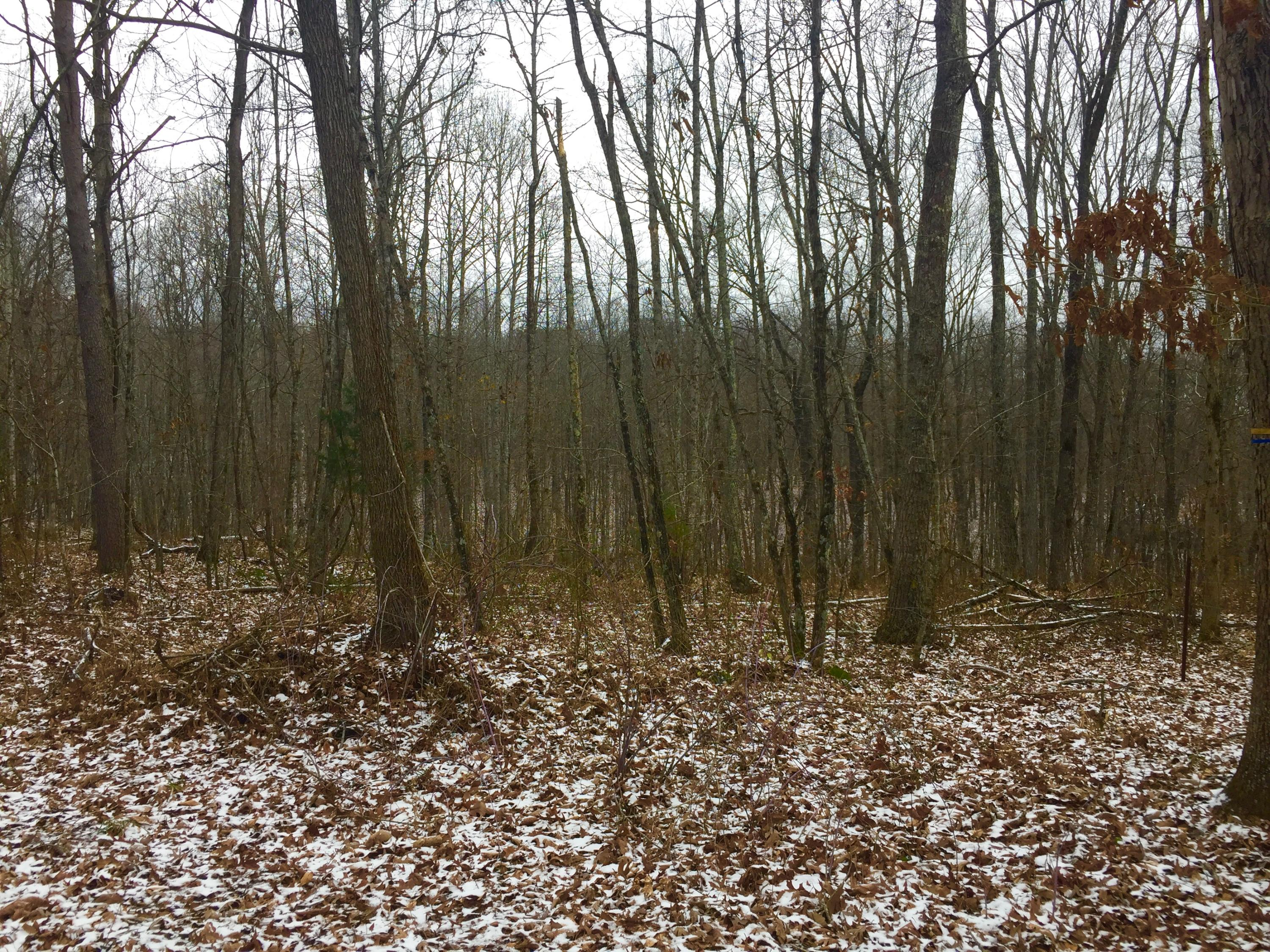 Blaylock Rd, Crossville, Tennessee 38572, ,Lots & Acreage,For Sale,Blaylock,1064959