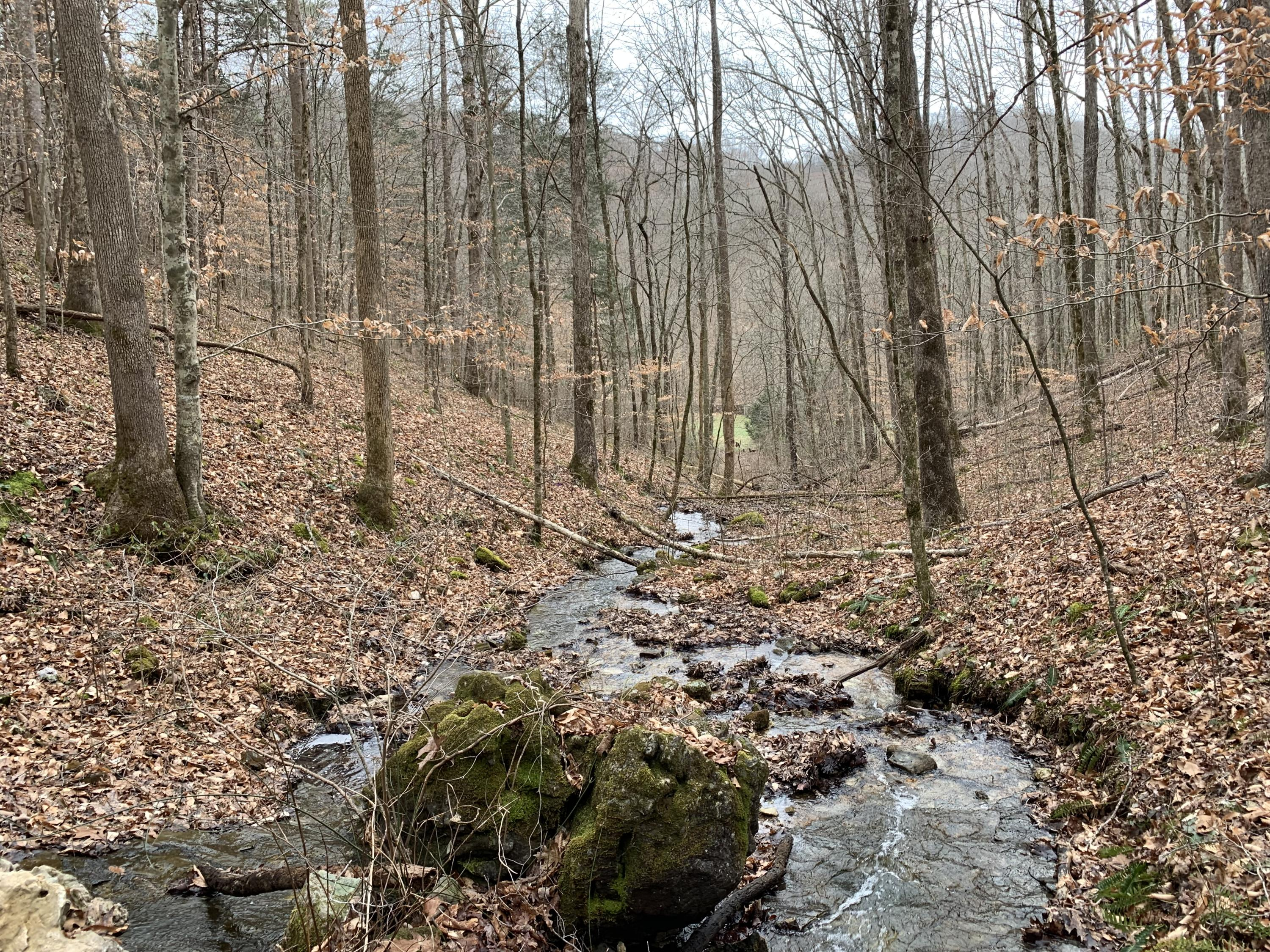 30.5 Ac Slate Creek- New Tazewell- Tennessee- United States 37825, ,Lots & Acreage,For Sale,Slate Creek,1068138