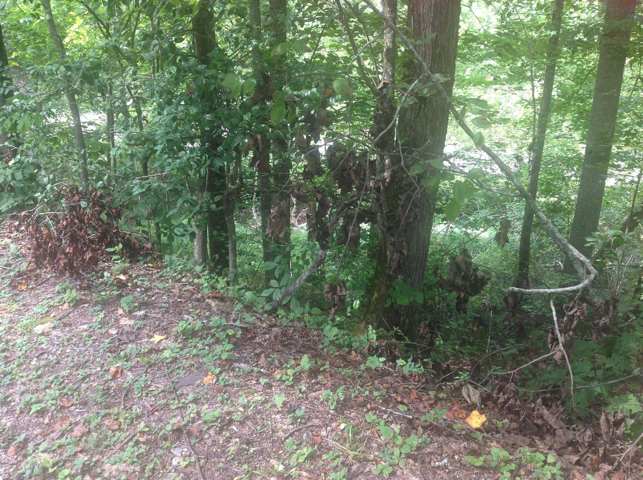 2 Whetstone Rd, Sevierville, Tennessee 37862, ,Lots & Acreage,For Sale,Whetstone,1069337