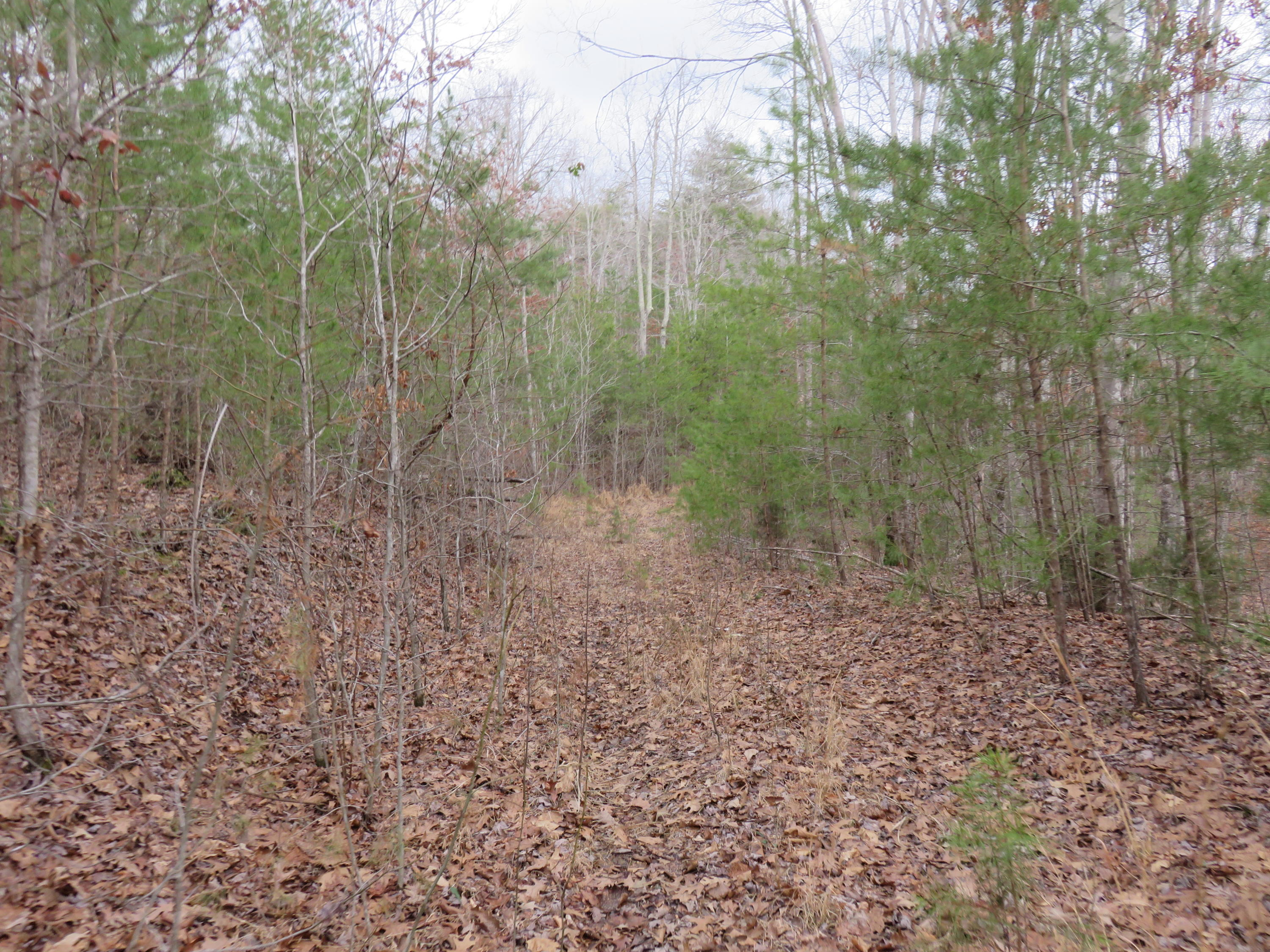 7.69 Acres Highway 68, Madisonville, Tennessee 37354, ,Lots & Acreage,For Sale,Highway 68,1069431
