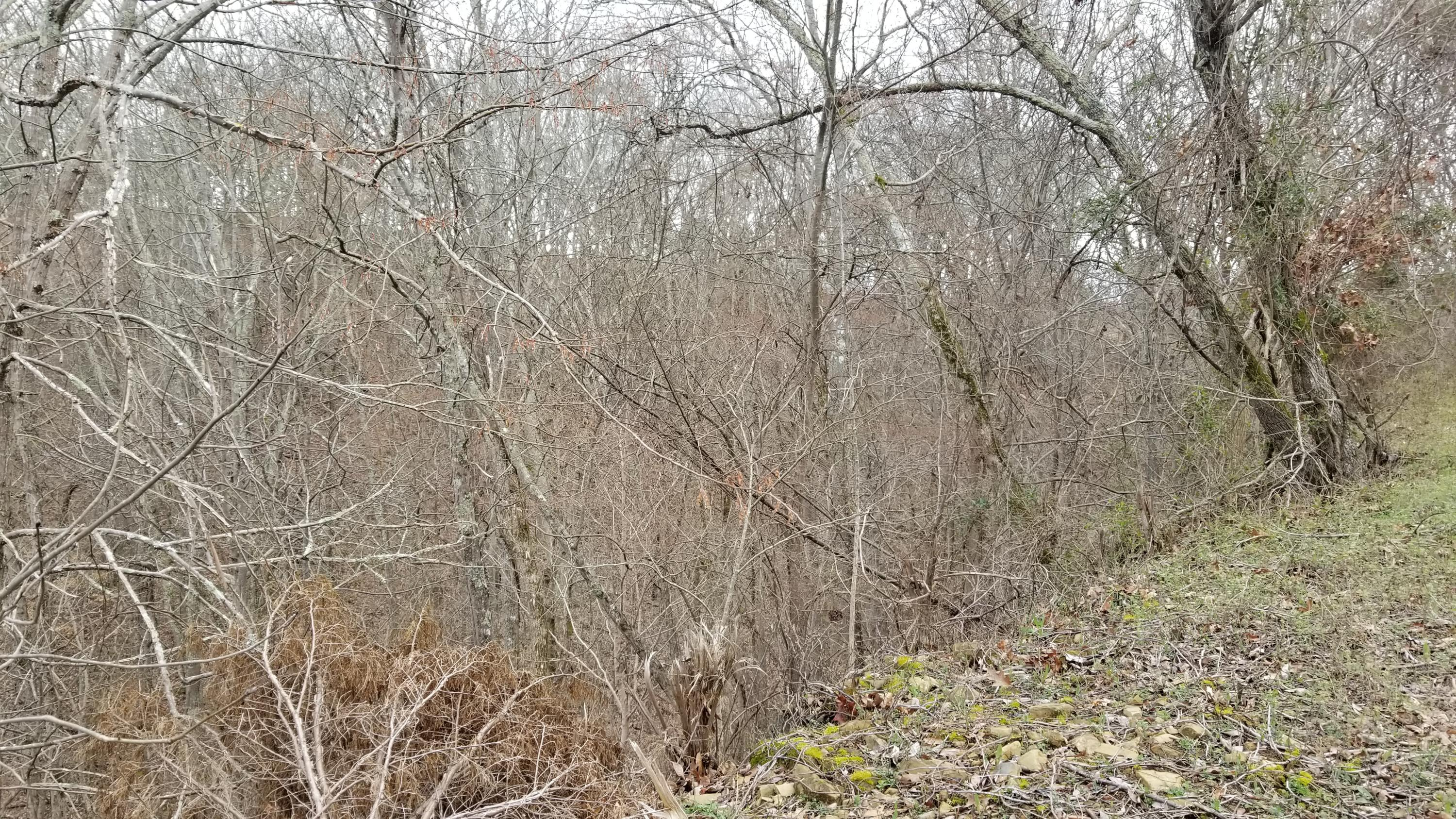 Last Chance Rd, Dandridge, Tennessee 37725, ,Lots & Acreage,For Sale,Last Chance,1071652
