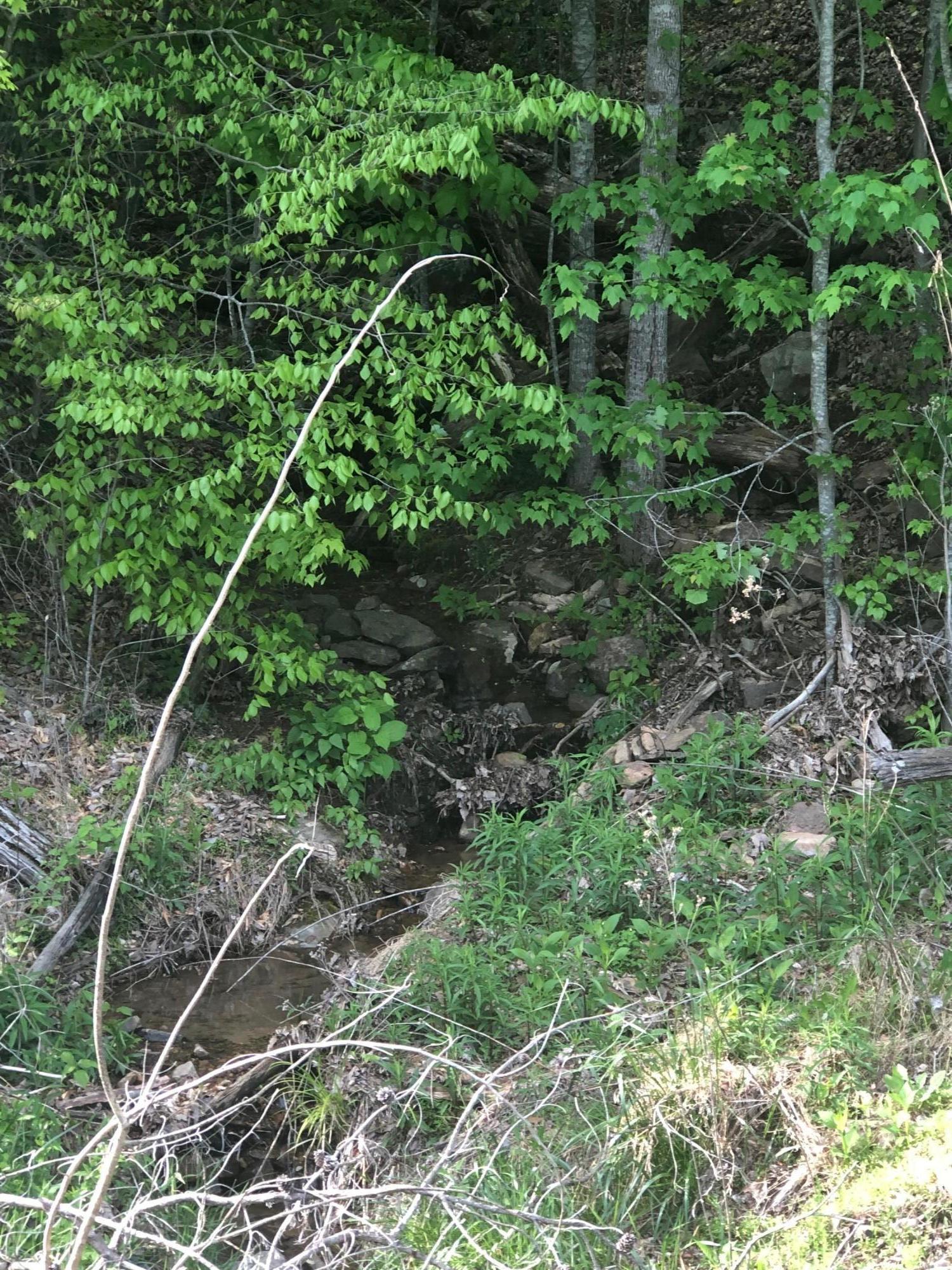 Timber Creek: