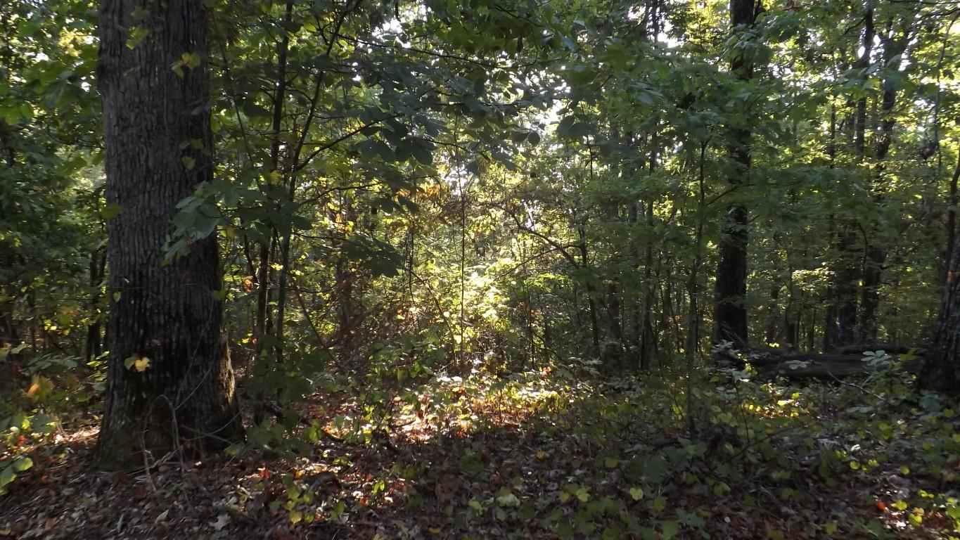 143 &144 Spruce Drive- Spring City- Tennessee 37381, ,Lots & Acreage,For Sale,Spruce,1083783