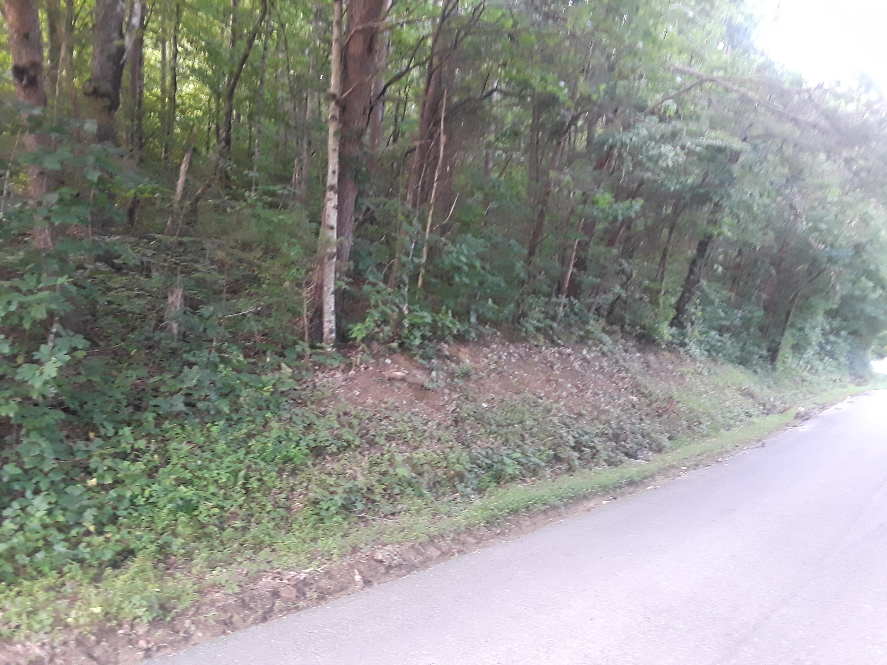 Kitts, Luttrell, Tennessee, United States 37779, ,Lots & Acreage,For Sale,Kitts,1085821