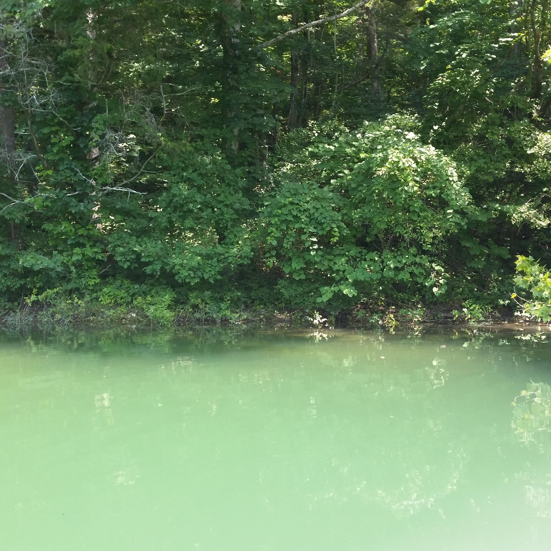 Blue Springs Rd: