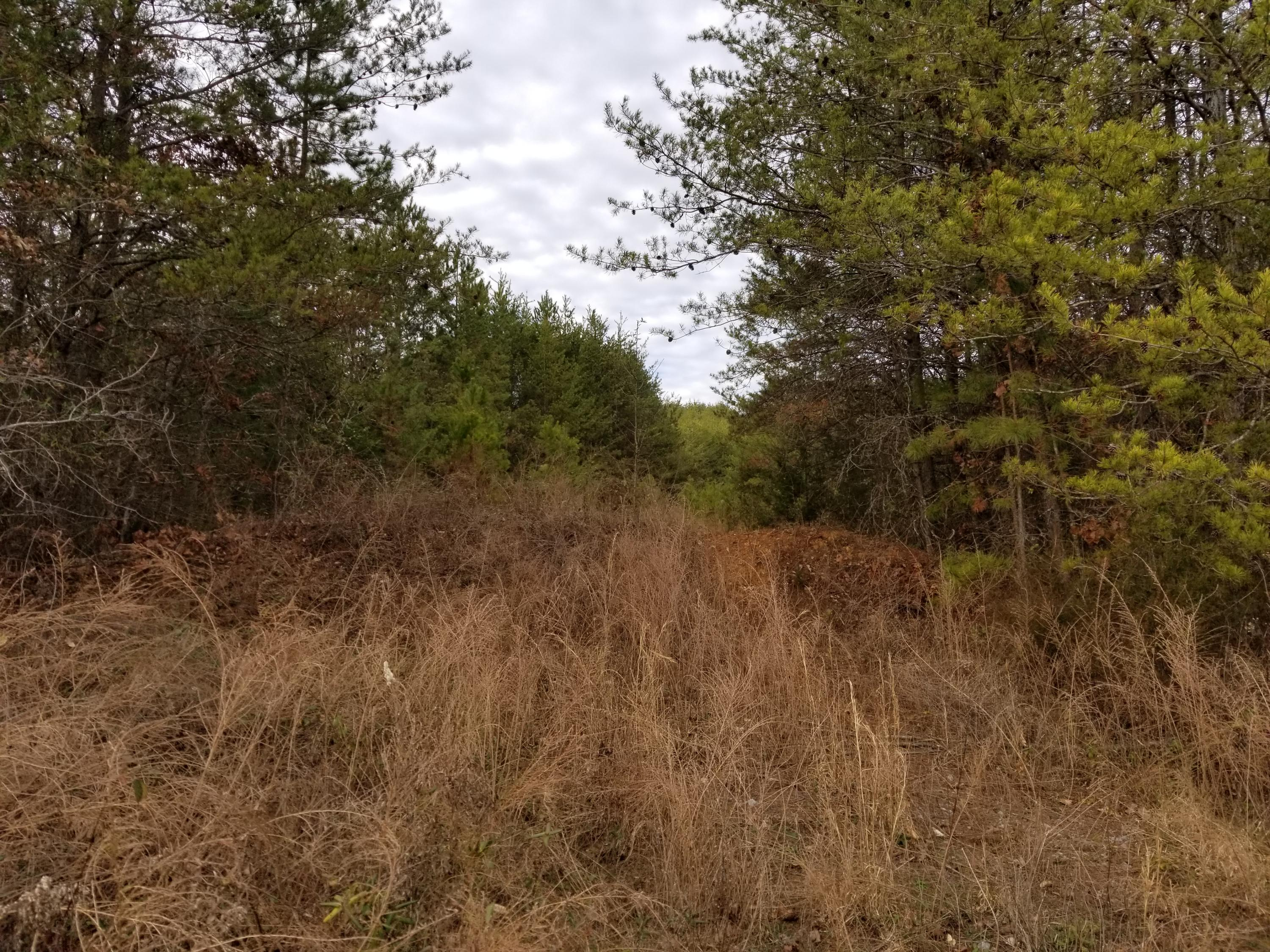 Snyder, Sevierville, Tennessee, United States 37876, ,Lots & Acreage,For Sale,Snyder,1087977