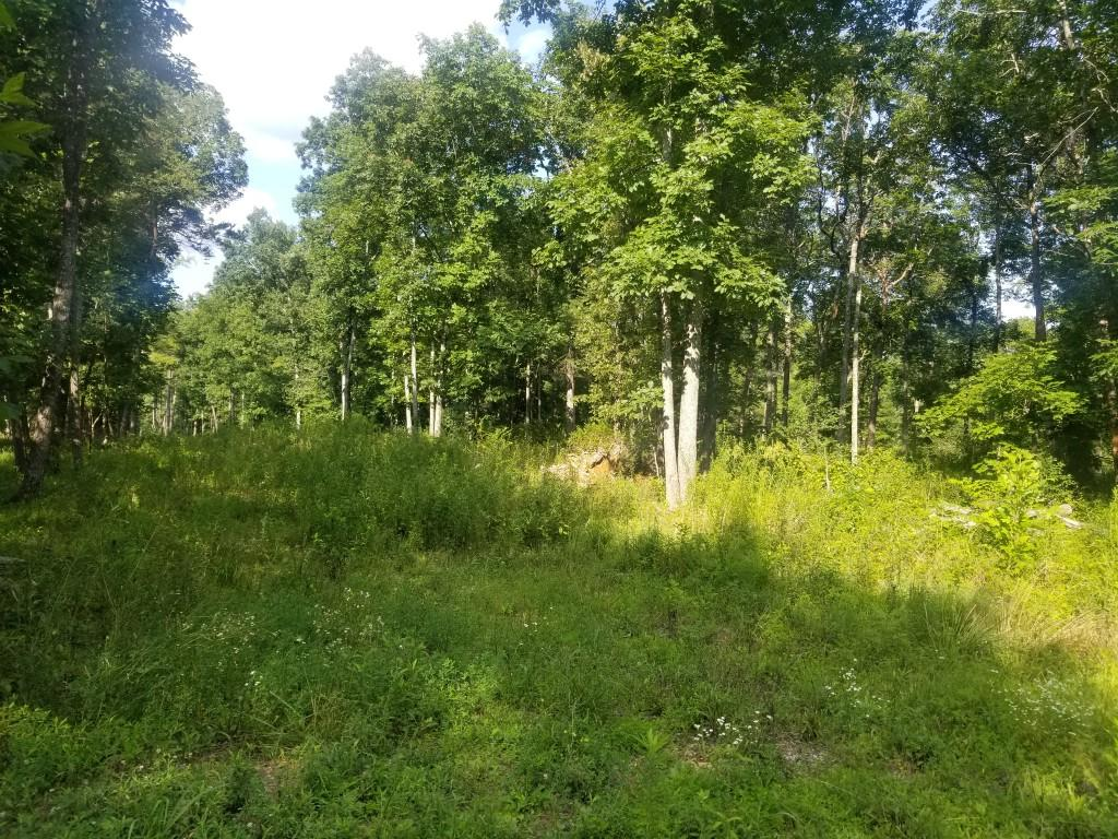 50+ Acres Mcnabb Rd, Evensville, Tennessee 37332, ,Lots & Acreage,For Sale,Mcnabb,1089932