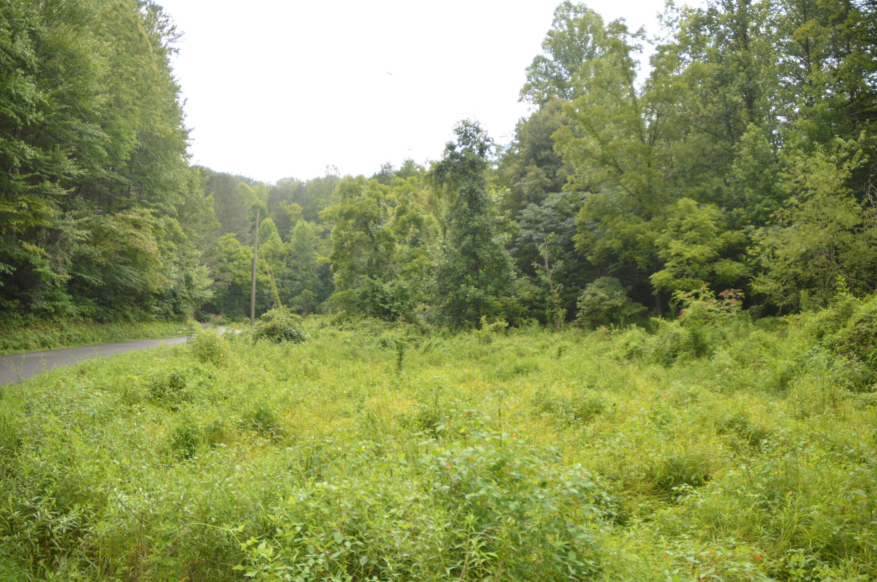 Grassy Branch, Sevierville, Tennessee, United States 37876, ,Lots & Acreage,For Sale,Grassy Branch,1091295