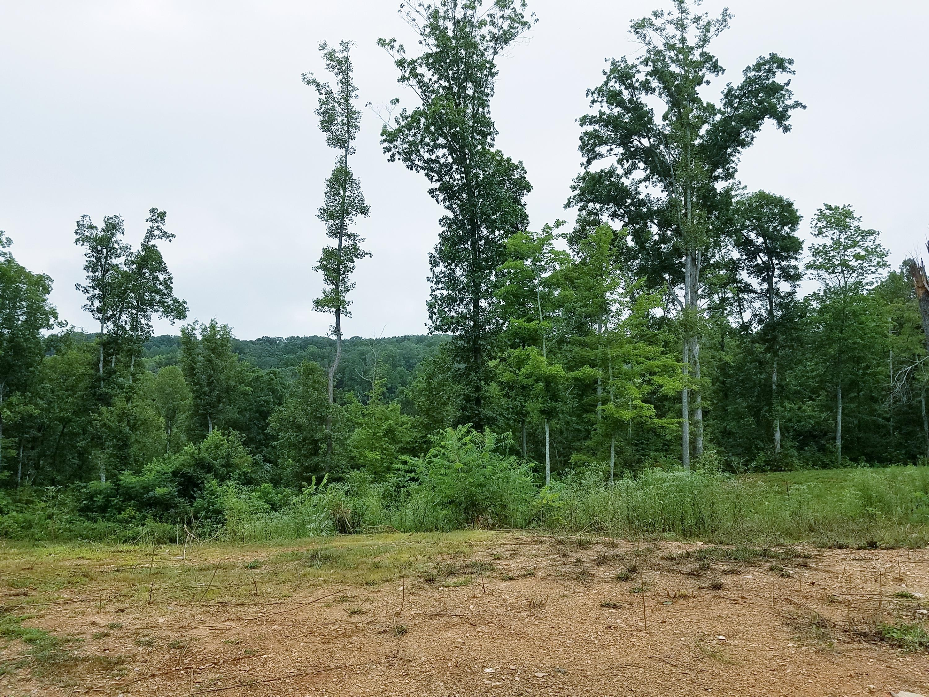 5338 Wolfenbarger Lane, Knoxville, Tennessee 37938, ,Lots & Acreage,For Sale,Wolfenbarger,1091239
