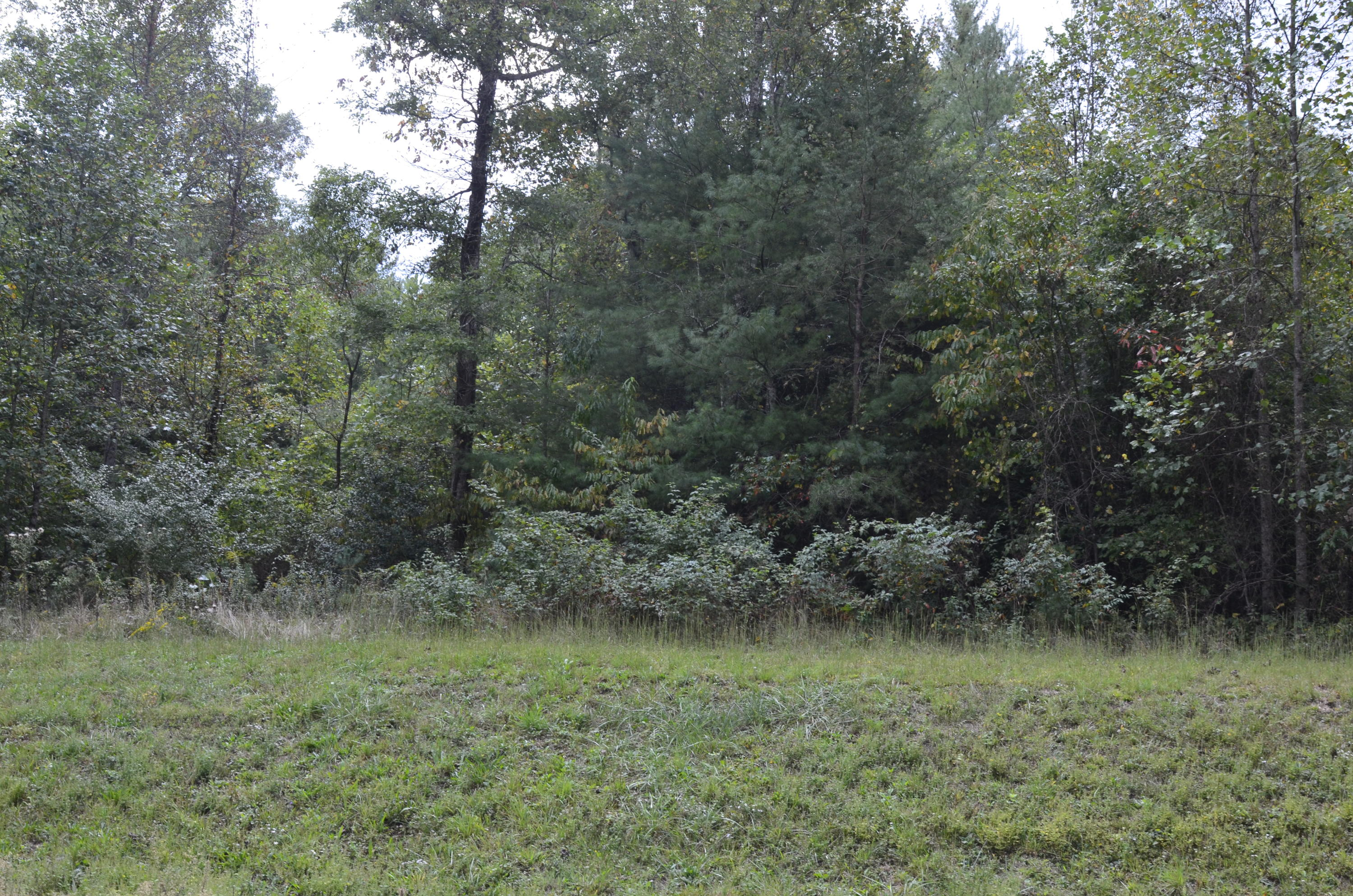 Lot 26 White Creek Court, Deer Lodge, Tennessee 37726, ,Lots & Acreage,For Sale,White Creek,1096231
