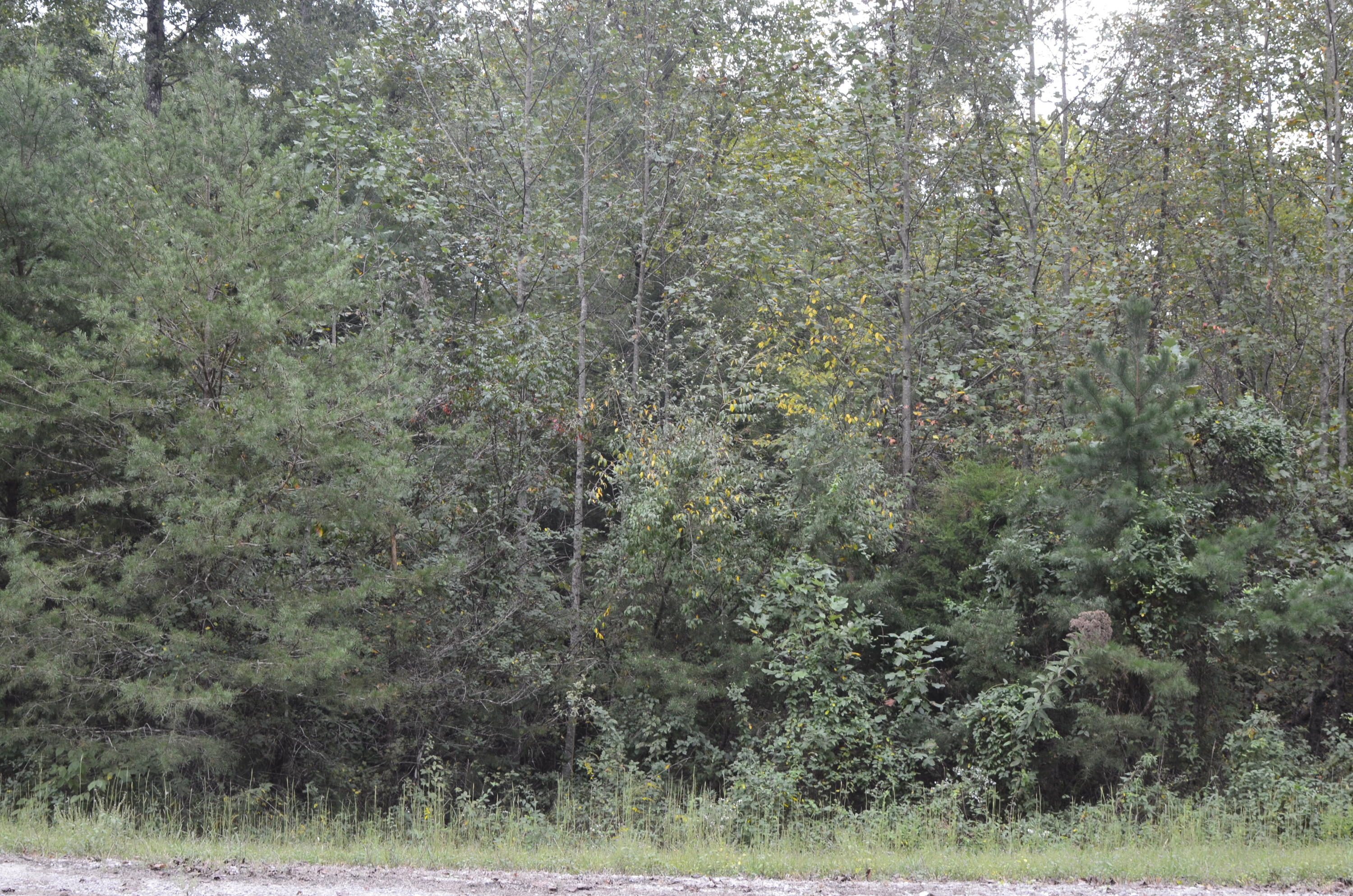 Lot 32 White Creek Loop, Deer Lodge, Tennessee 37726, ,Lots & Acreage,For Sale,White Creek,1096235