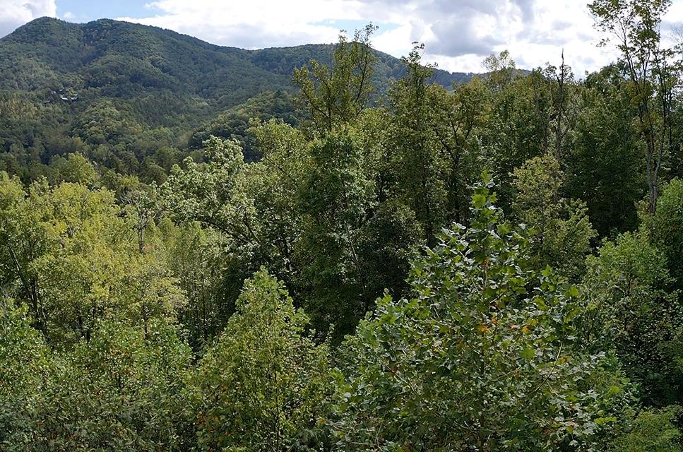 Lot 181 Timber Cove Way, Sevierville, Tennessee 37862, 2 Bedrooms Bedrooms, ,3 BathroomsBathrooms,Single Family,For Sale,Lot 181 Timber Cove,1097955