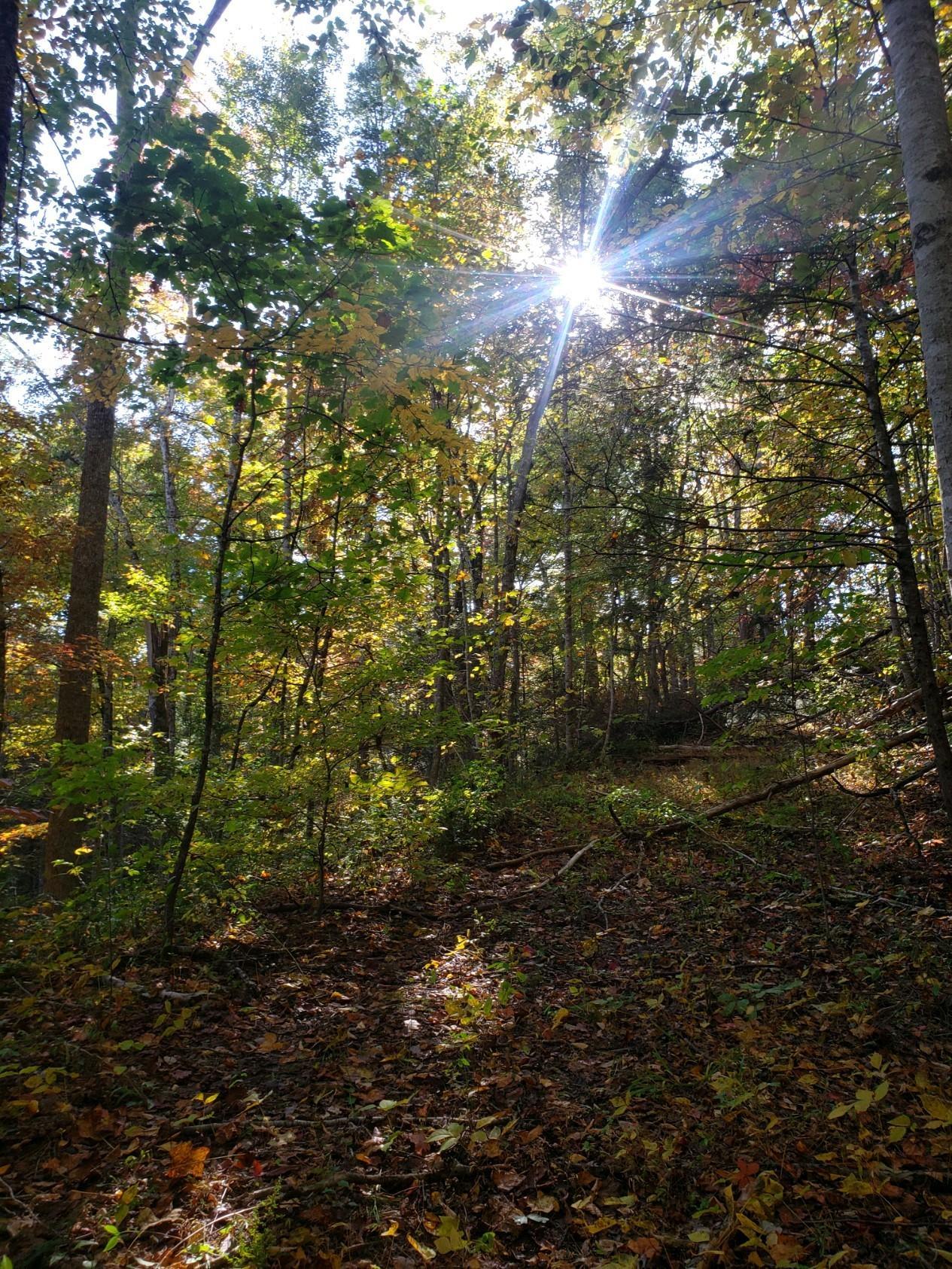 Parcel 208.00 Autumn Ln, Gatlinburg, Tennessee, United States 37738, ,Lots & Acreage,For Sale,Parcel 208.00 Autumn Ln,1100077