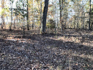 Half Moon Shores Drive, Ten Mile, Tennessee, United States 37880, ,Lots & Acreage,For Sale,Half Moon Shores Drive,1100350