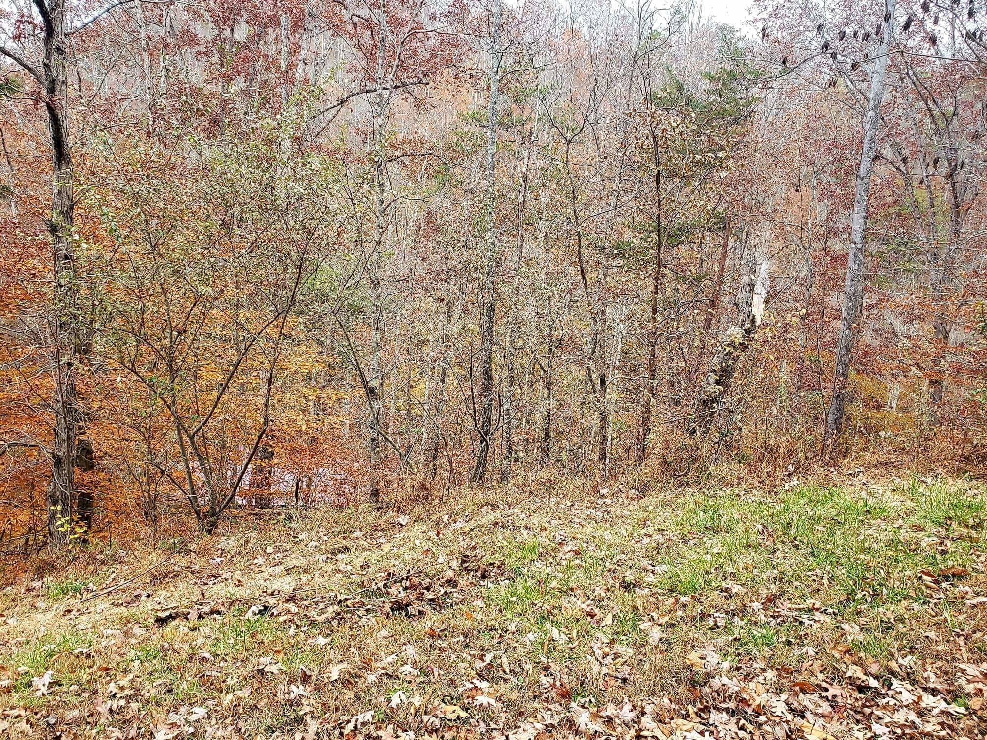 Lot 9 Poplar Creek Court, Caryville, Tennessee 37714, ,Lots & Acreage,For Sale,Poplar Creek,1101245