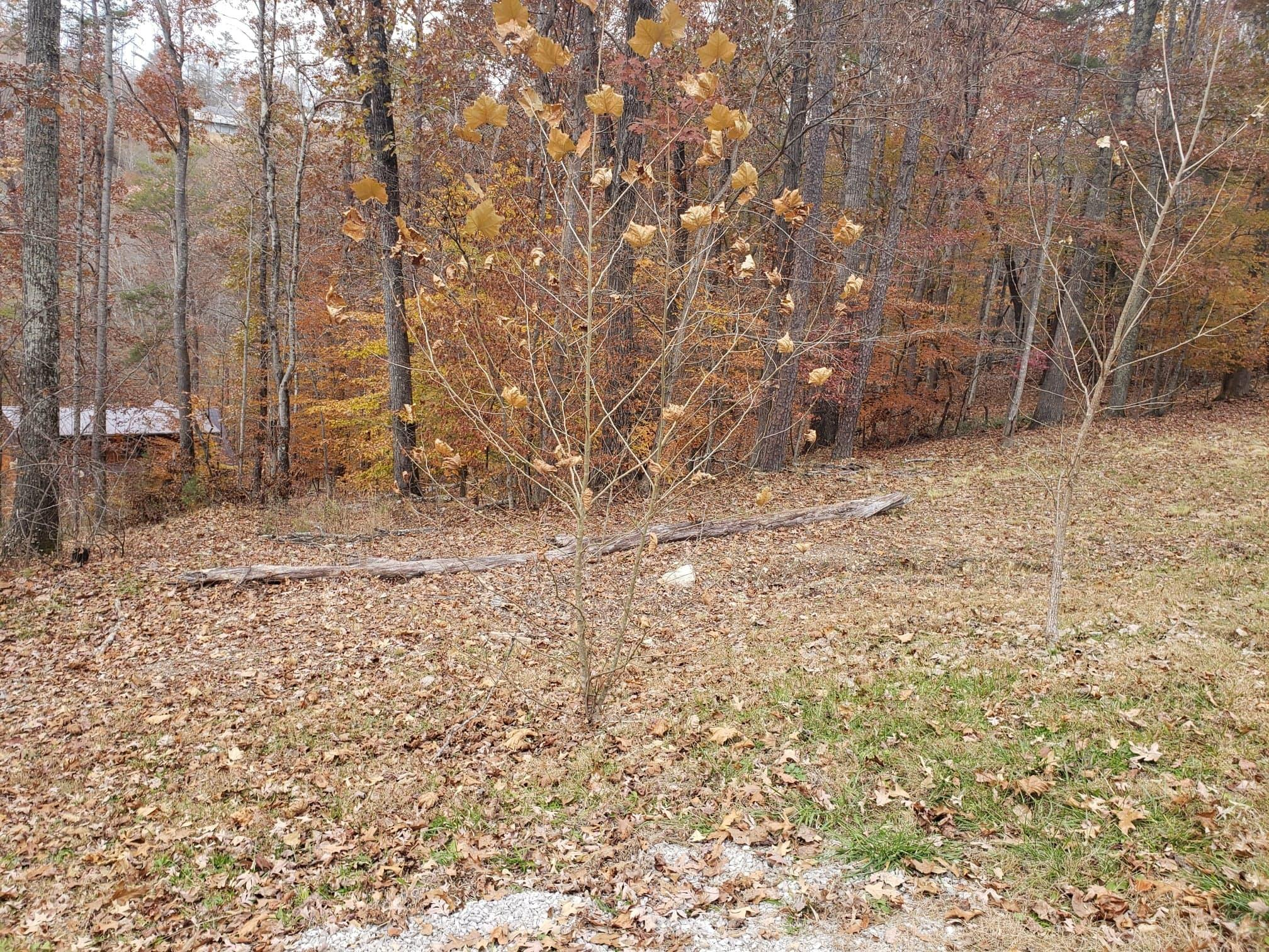 Lot 18 Evergreen Circle, Caryville, Tennessee 37714, ,Lots & Acreage,For Sale,Evergreen,1101240