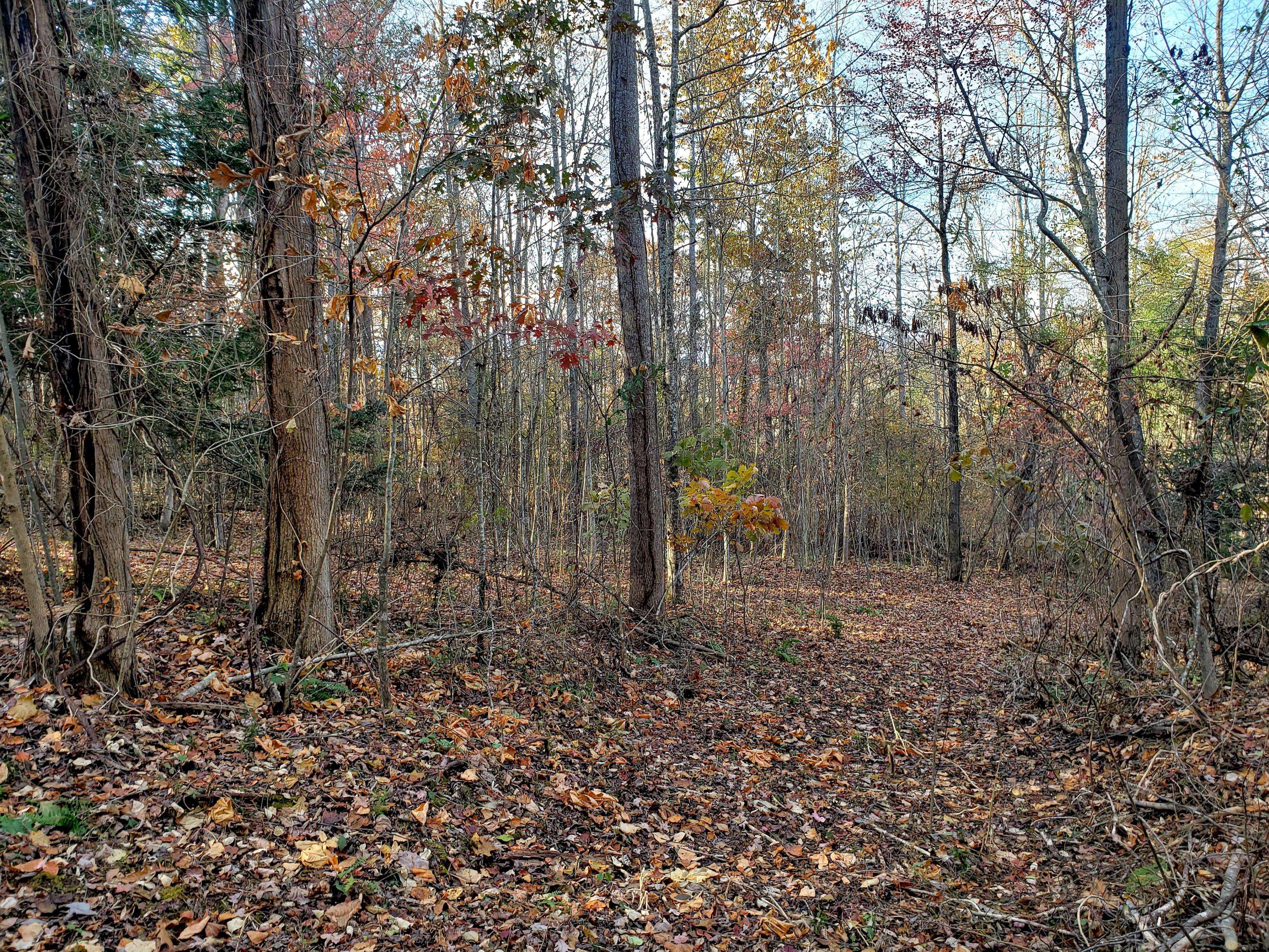 Lot 17 Lakemont Lane: