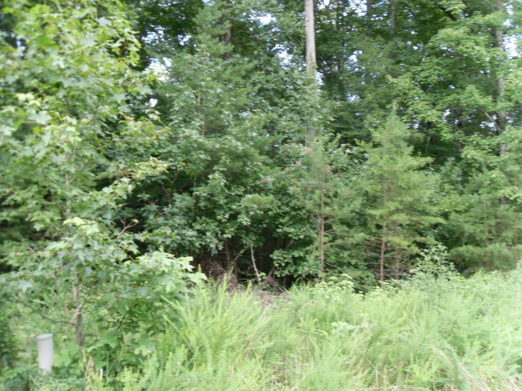 Eagle Ridge Rd, Rockwood, Tennessee 37854, ,Lots & Acreage,For Sale,Eagle Ridge,1108652