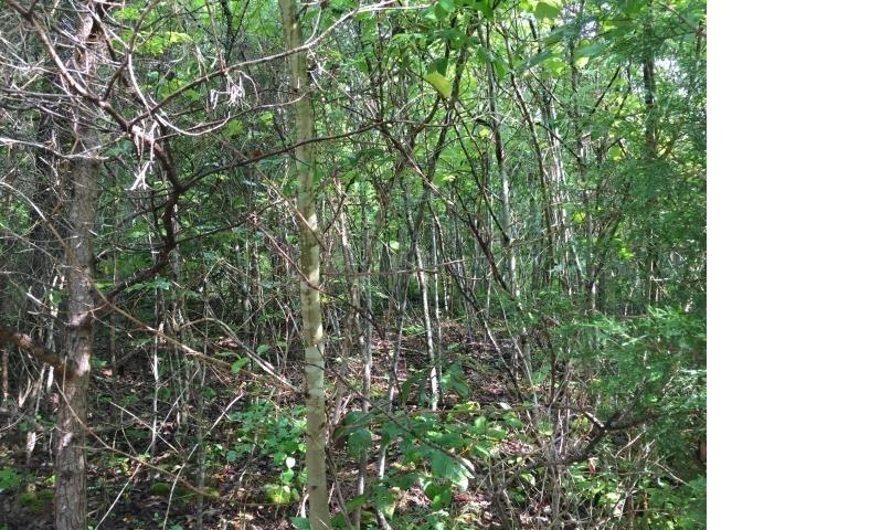Lot 728 Clearwater Rd