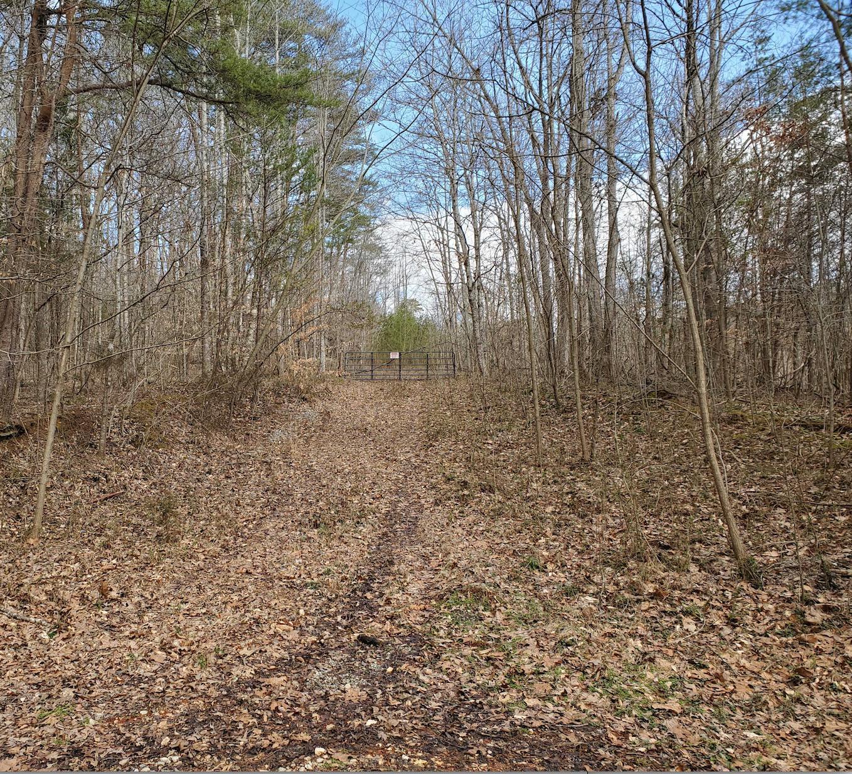 Pine Hollow Rd: