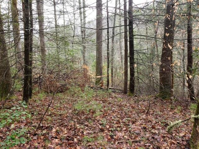 Overlook View Rd, Walland, Tennessee 37886, ,Lots & Acreage,For Sale,Overlook View Rd,1111533
