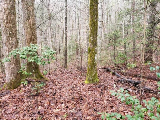 Overview Look Rd, Walland, Tennessee, United States 37886, ,Lots & Acreage,For Sale,Overview Look Rd,1111535