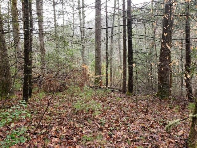 Overlook View Rd, Walland, Tennessee, United States 37886, ,Lots & Acreage,For Sale,Overlook View Rd,1111532