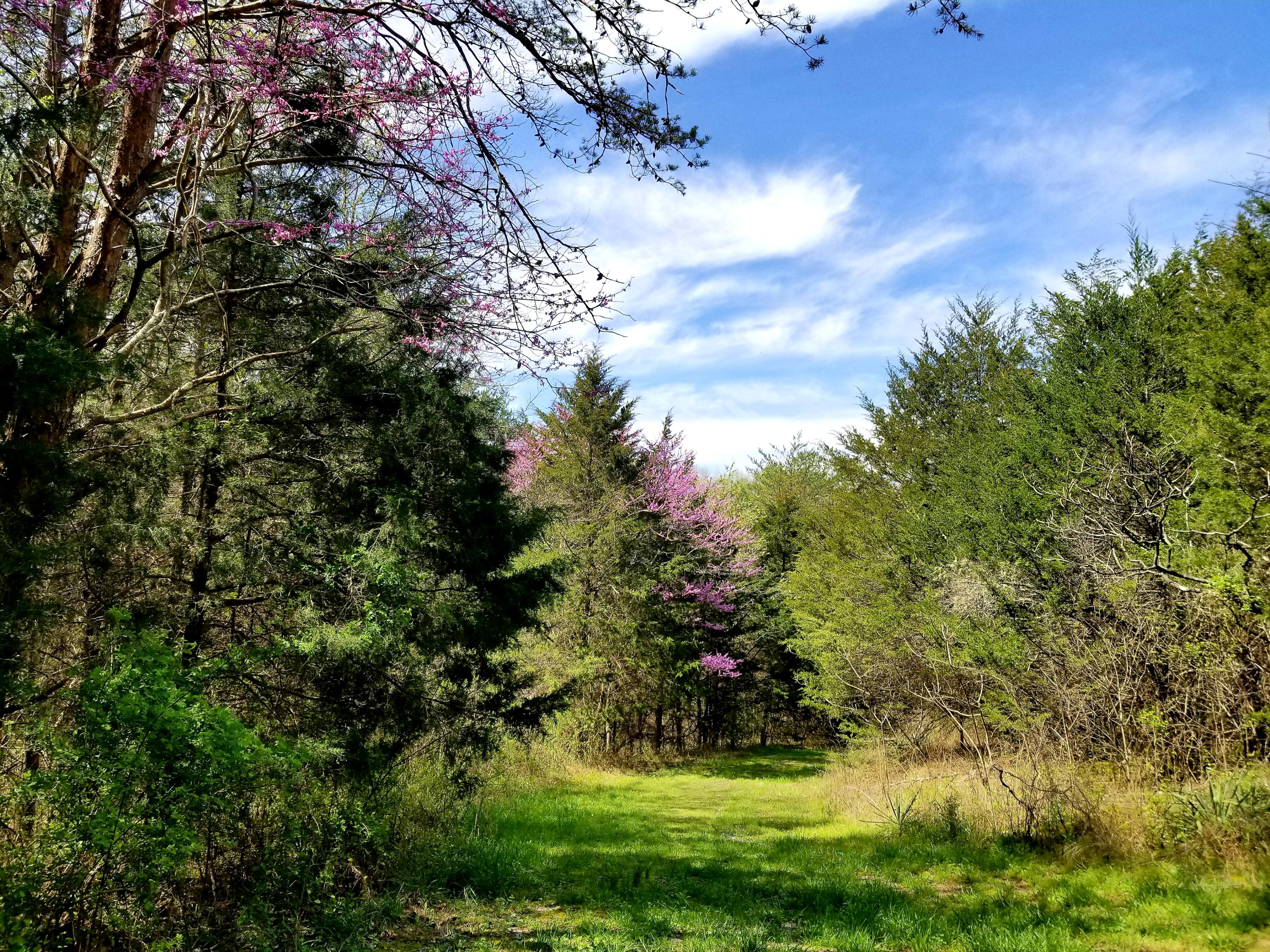 Lick Creek, Tellico Plains, Tennessee, United States 37385, ,Lots & Acreage,For Sale,Lick Creek,1112544