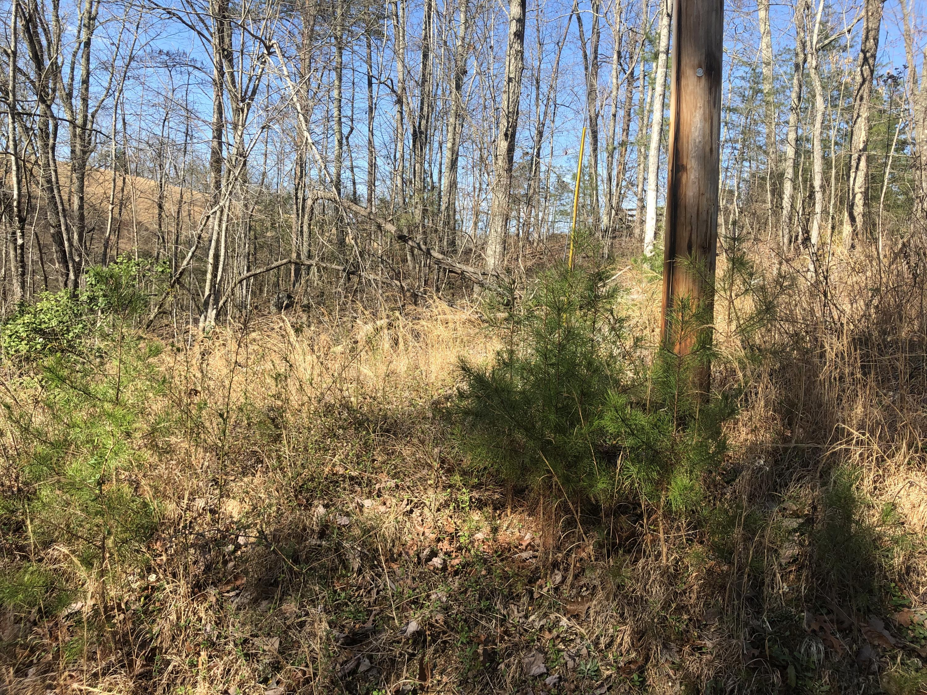 Lot 163 Maple, Spring City, Tennessee, United States 37337, ,Lots & Acreage,For Sale,Maple,1122170