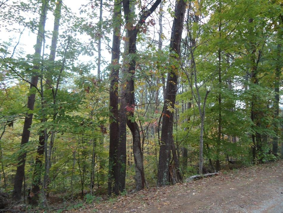 Parcel 129 Nebo Mountain, Walland, Tennessee, United States 37886, ,Lots & Acreage,For Sale,Nebo Mountain,1125240