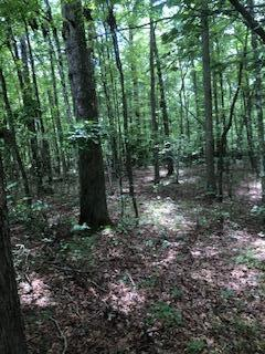 Chinkapin Tr, Monterey, Tennessee 38574, ,Lots & Acreage,For Sale,Chinkapin,1125242