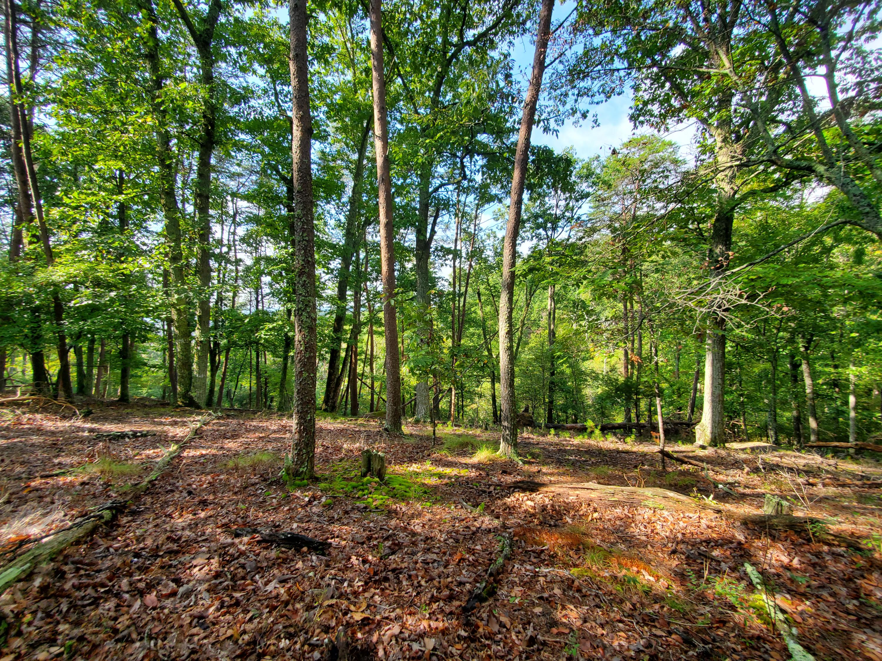 1312 Muskogee, Mooresburg, Tennessee, United States 37811, ,Lots & Acreage,For Sale,Muskogee,1131214