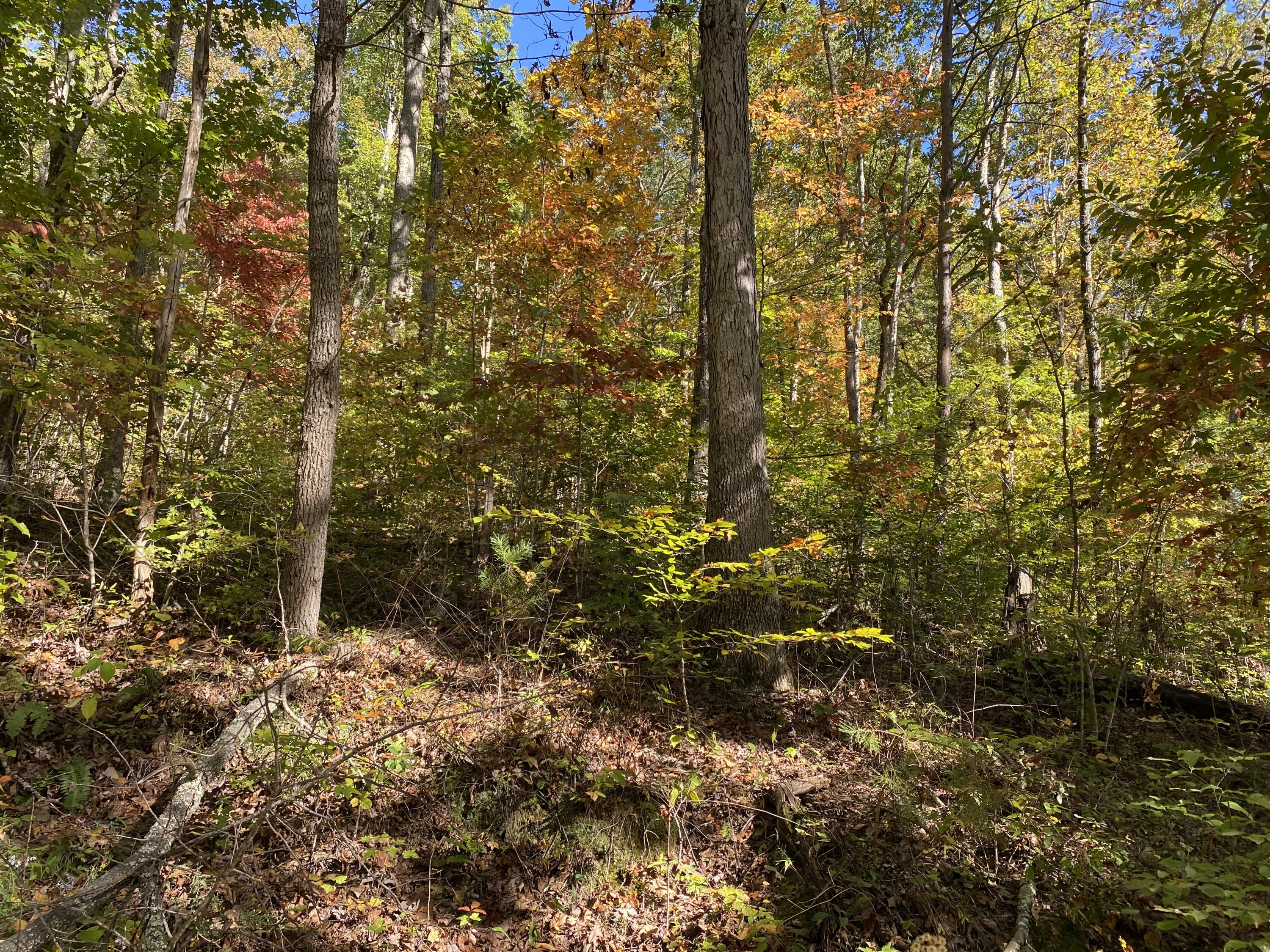 Chestnut Grove Rd, Maynardville, Tennessee 37807, ,Lots & Acreage,For Sale,Chestnut Grove,1132759