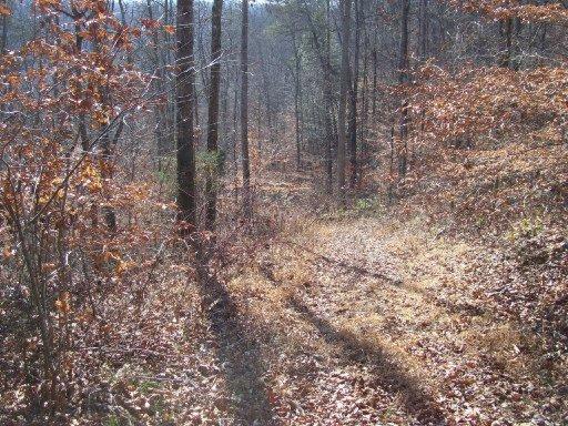 Proffit Hollow Lane: