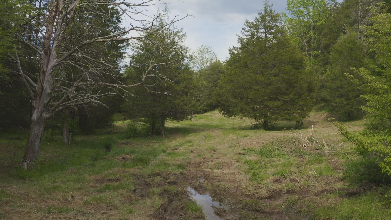 106 Acres Raven Fork Rd: