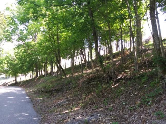 328 Oak Run Lane: