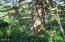 TL 3900 NE Ocean Wayside Lane, Yachats, OR 97498 - Large Timber