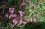 901 Yachats River Rd, Yachats, OR 97498 - Lawn flowers