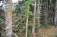 511 SE Inlet Ave, Lincoln City, OR 97367 - Adjoining Forest