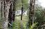 12881 SE Elderberry Drive, South Beach, OR 97366 - Home through the trees