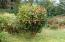 12881 SE Elderberry Drive, South Beach, OR 97366 - Decorative shrubs