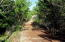 32205 Pine Rd, Pacific City, OR 97135 - trail behind house