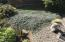 78 Greenhill Dr, Yachats, OR 97498 - plants