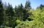 372 Fruitvale Rd, Newport, OR 97365 - Trees