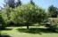 126 N Holiday Lane, Otis, OR 97368 - tree swing