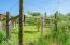 847 Hamer Rd, Siletz, OR 97380 - Fruit orchard
