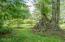 847 Hamer Rd, Siletz, OR 97380 - Old Growth Trees