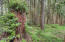 571 Fairway Dr, Gleneden Beach, OR 97388 - Forested back yard