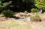 1835 NE Arcadia Drive, Toledo, OR 97391 - Landscaping