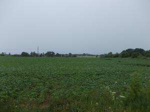 State Road 28, Sheboygan Falls, WI 53085